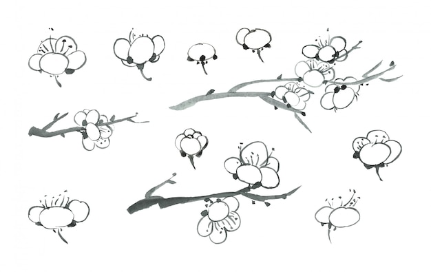 Black ink sakura blossoms growing in spring on a branch. japanese cherry petals.