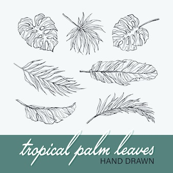 Black isolated palm and monstera leaves' collection, tropical botanical hand drawn   set.