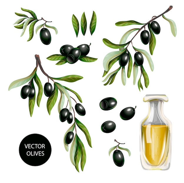 Black olives and olive oil isolated