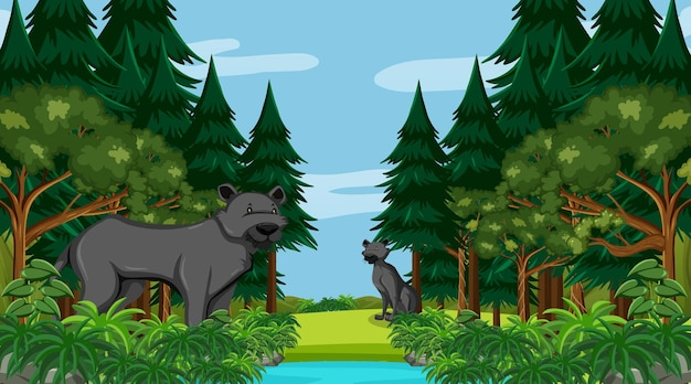 Black panther in forest scene with many trees