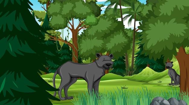 Черная пантера в лесной сцене с множеством деревьев