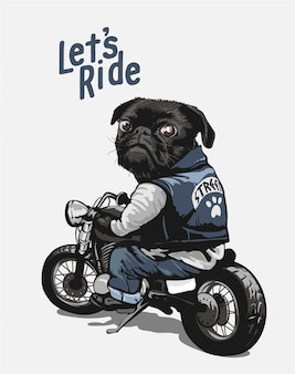 Black pug on motorcycle cartoon illustration