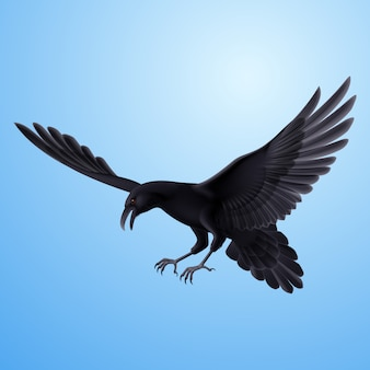 Black raven on blue background