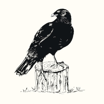 Black raven hand drawn