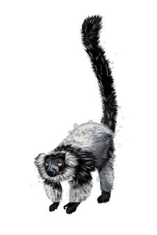 수채화의 스플래시에서 검은 sclater 여우 원숭이