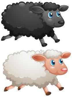 白い背景の上の黒い羊と白い羊