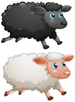 Black sheep and white sheep on white background