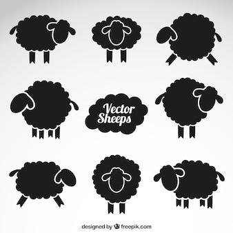Black sheeps