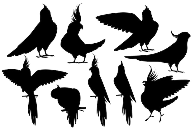 Black silhouette set of adult parrot of normal grey cockatiel (nymphicus hollandicus, corella) cartoon bird design flat vector illustration isolated on white background.