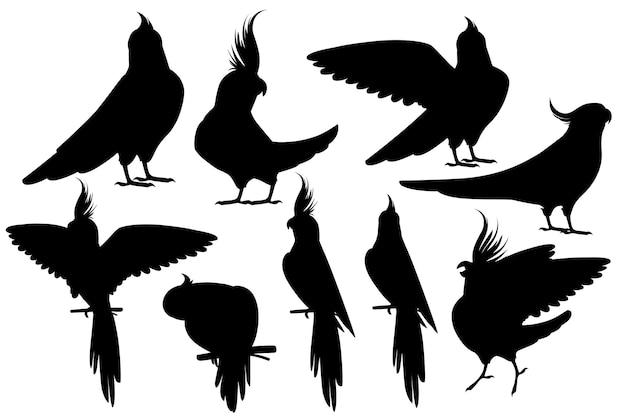 흰색 배경에 격리된 일반 회색 앵무새(nymphicus hollandicus, corella) 만화 새 디자인 플랫 벡터 삽화의 성인 앵무새의 검은 실루엣 세트.
