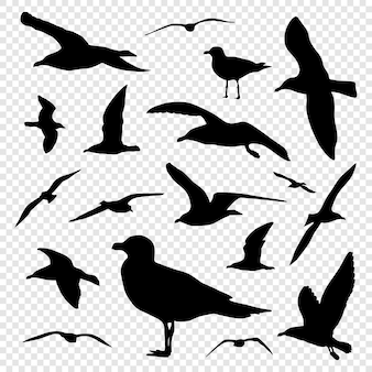 Black silhouette set of seagull isolated on transparent