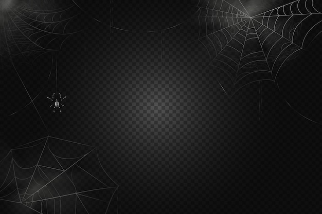 A black spider hangs on a web. scary spiderweb of halloween symbol. realistic  silhouette.