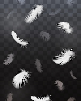 Black and white bird feathers realistic transparent set isolated