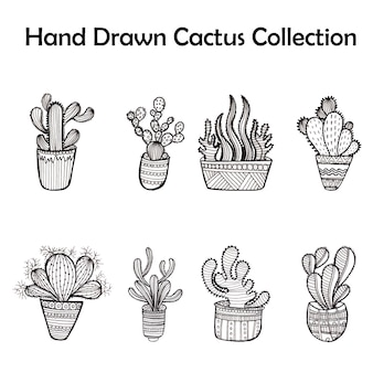 Black and white cactus collection