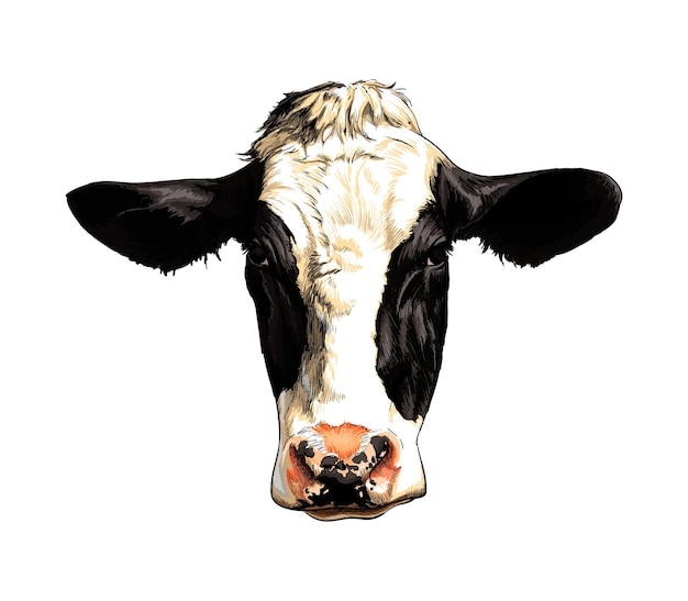 Black and white cow head portrait from a splash of watercolor