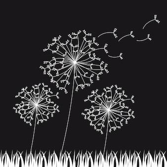 Black and white dandelios nature background