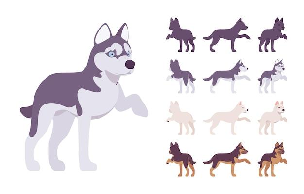 黒、白犬、ハスキー、羊飼いの足セット。ペット、家族の同伴者、家の警備、農場、警察のセキュリティの品種。分離、白い背景、さまざまなビューをベクトルフラットスタイル漫画イラスト