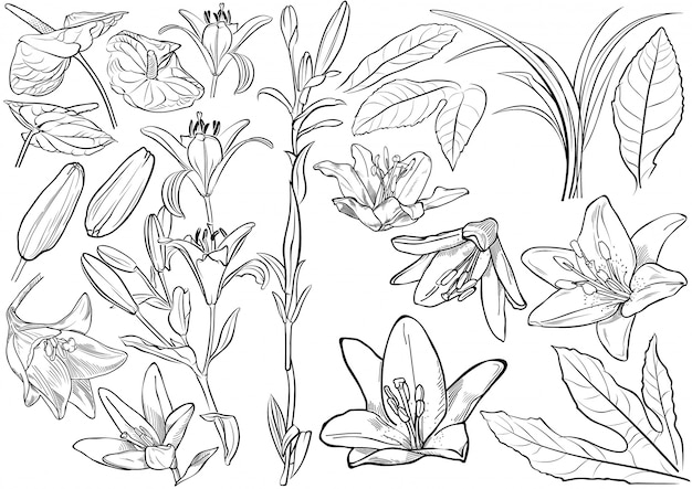 Black and white exotic flowers drawing set