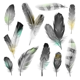 Black and white feathers set