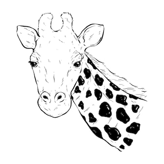Black and white giraffe head with hand draw or sketch style