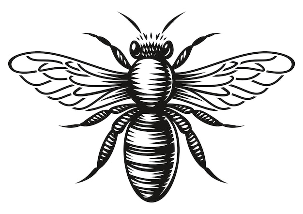 A black and white honey bee in engraving style on white background