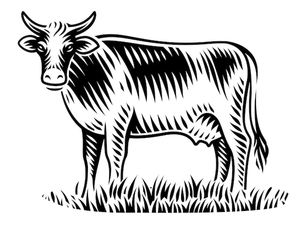 A black and white illustration of cow in engraving style on white background
