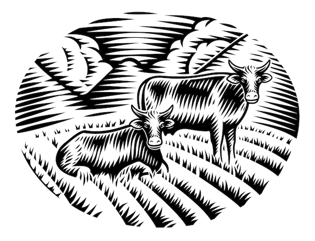 A black and white illustration of cows on grass in engraving style