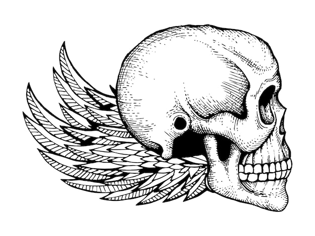 Black and white ink sketched human skull with wings isolated on white