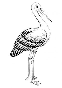 Black and white landscape stork