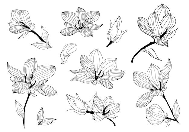 Black and white line illustration of magnolia flowers
