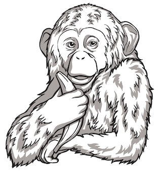 Black and white monkey with a banana. vector illustration. chinese new year symbols