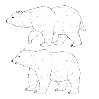 Black and white polar bears with hand draw or sketch style