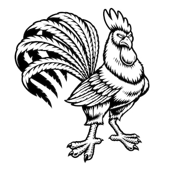 Black and white rooster isolated on white