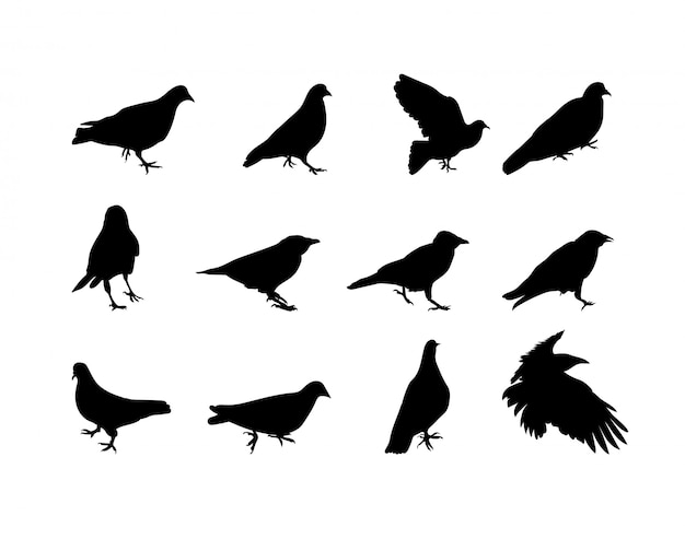 Black and white silhouette dove crow .  illustration