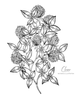 Black and white sketch of clovers.