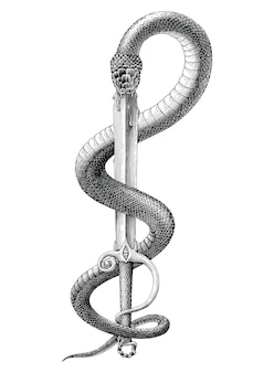 Black and white snake stuck in sword in engraving style