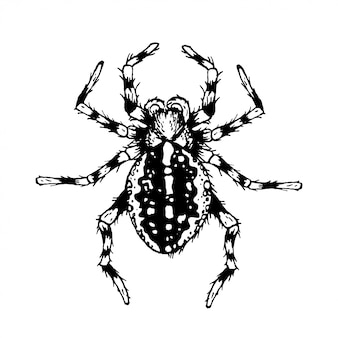 Black and white spider.