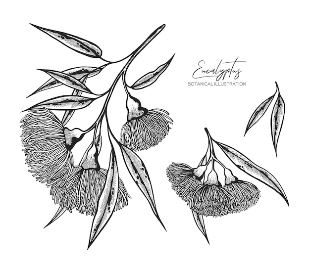 Black and white vector sketch illustration of eucalyptus design elements for wedding invitations greeting cards wrapping paper cosmetics packaging labels tags invite posters