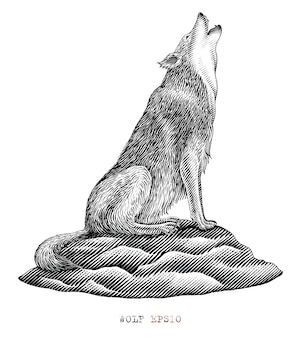 Black and white wolf howling in engraving style