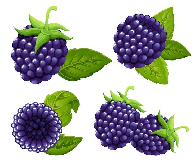 Набор ежевики. иллюстрация лесной ягоды с зелеными листьями. иллюстрация для декоративного плаката, эмблема натурального продукта, фермерский рынок. страница сайта и мобильное приложение.