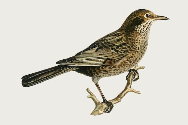 Blackbird in hand drawn style