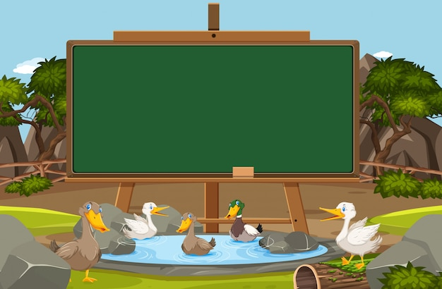 Blackboard template with ducks swimming in the pond