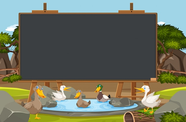 Blackboard template with many ducks in the pond