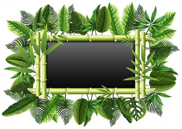 Blackboard with bamboo and green leaves