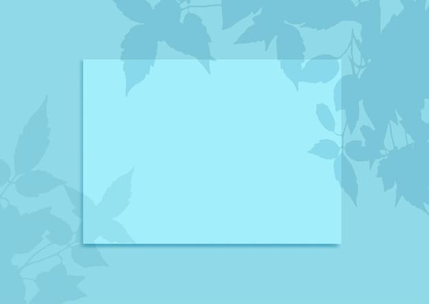 식물 그림자 오버레이가 있는 빈 디스플레이 배경