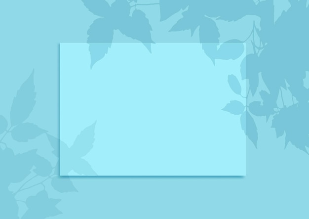 Blank display background with a plant shadow overlay