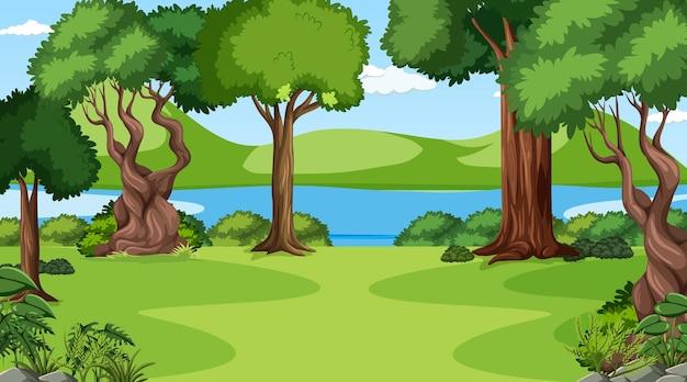 다양한 숲 나무가 있는 낮 장면의 빈 숲