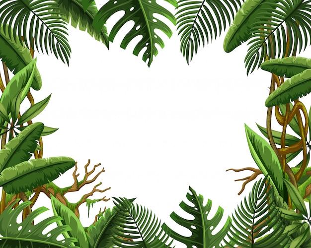Blank jungle leave frame