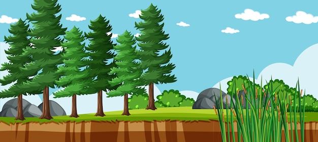 多くの松のある自然公園のシーンの空白の風景