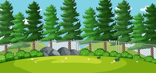 Paesaggio vuoto nella scena del parco naturale con molti pini